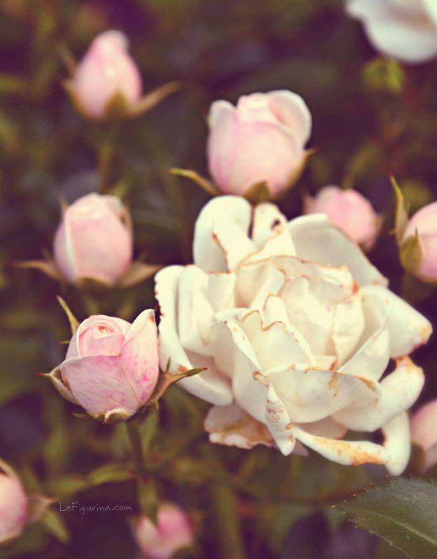 Ci sono persone che, nel silenzio, hanno imparato ad ascoltare anche i fiori. E quel che dicono è infinito www.lafigurina.com