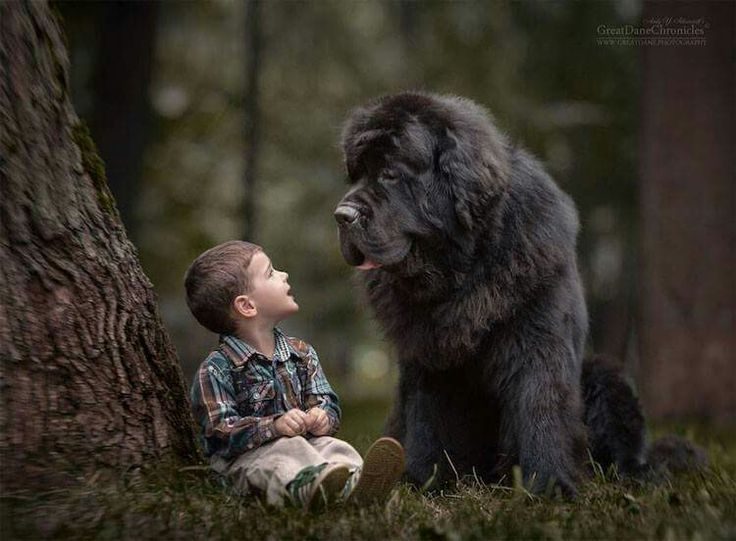 Big dog, small boy