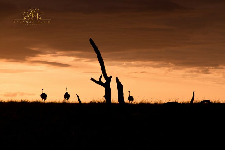 Sundowner by Karanja Njiiri on 500px