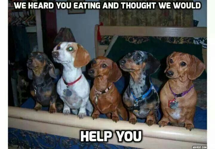 Oh Doxies.....so true :)