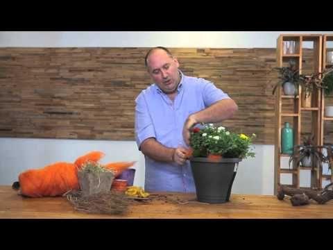 Selbst machen, wunderschöne Arrangements mit Ranunculus Sprinkles, von Oliver Mathys