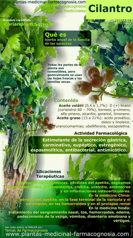 Propiedades del Cilantro #vidasana #comerbien #saludable #cilantro #alimentos