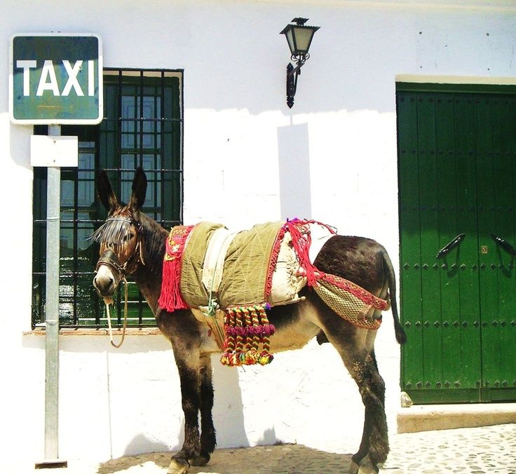 Het leven verloopt nog lekker rustig in de binnenlanden van Andalusie. Wil je dit schitterende stukje Spanje ook eens meemaken? Kom met ons mee op dagexcursie. We halen je op met onze comfortabele Land Rover.