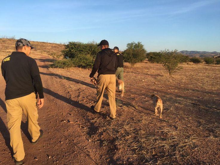 <p>Chihuahua, Chih.- Elementos de la Agencia Estatal de Investigación llevaron a cabo ayer miércoles, un rastreo para la búsqueda y localización