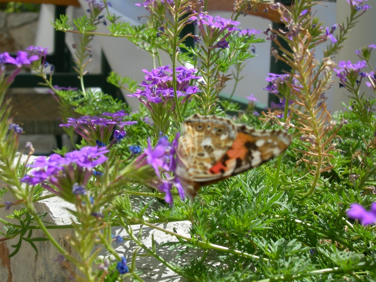 working on flowers - every summer many many butterflies at our veranda.....