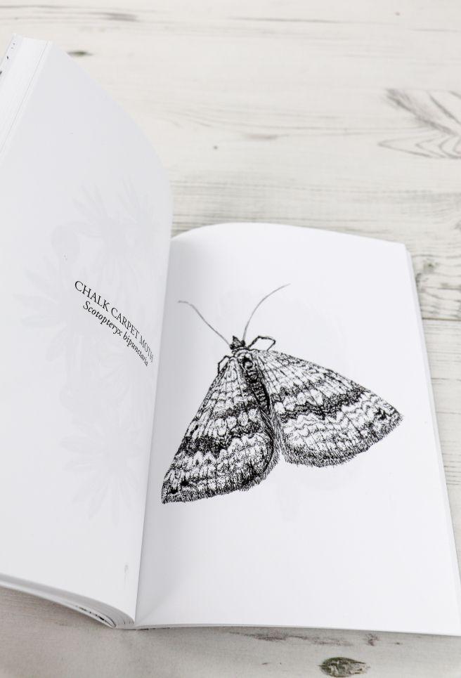 0a6403728ceed Chalk Carpet moth illustration (c) Ella Johnston The Orphaned Spaces (c)  Dunlin Press