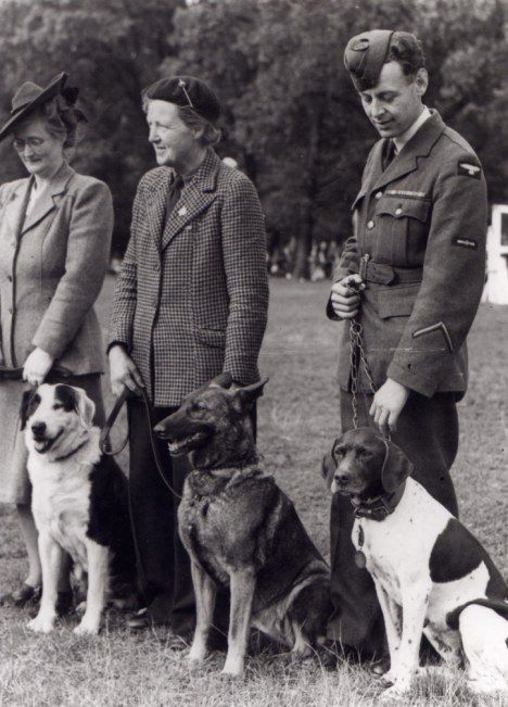 Judy,the prisoner of war dog, far right, is pictured with fellow Dickin medal recipients in 1946.