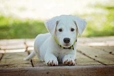 Evita los picotazos eligiendo bien el collar antipulgas para tu perro