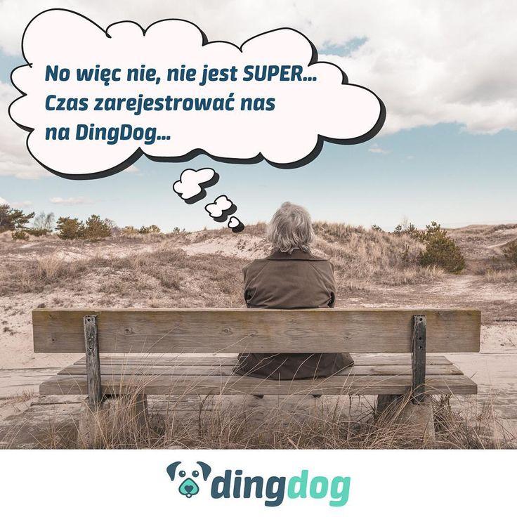 DingDog sprawia radość nie tylko psom. I Wasze życie może zmienić  #DingDog