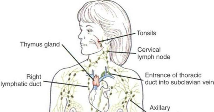 What to Do to Get Rid of Extra Lymph Fluids and Detox Lymph Nodes? Lymph Fluids can cause few health problems. The lymph system of our body is the sewage system for normal metabolic toxins. Lymph nodes actually give antigens for purifying fluids that...find more here: http://worldhealthchoice.com/get-rid-lymph-fluids-detox-lymph-nodes/