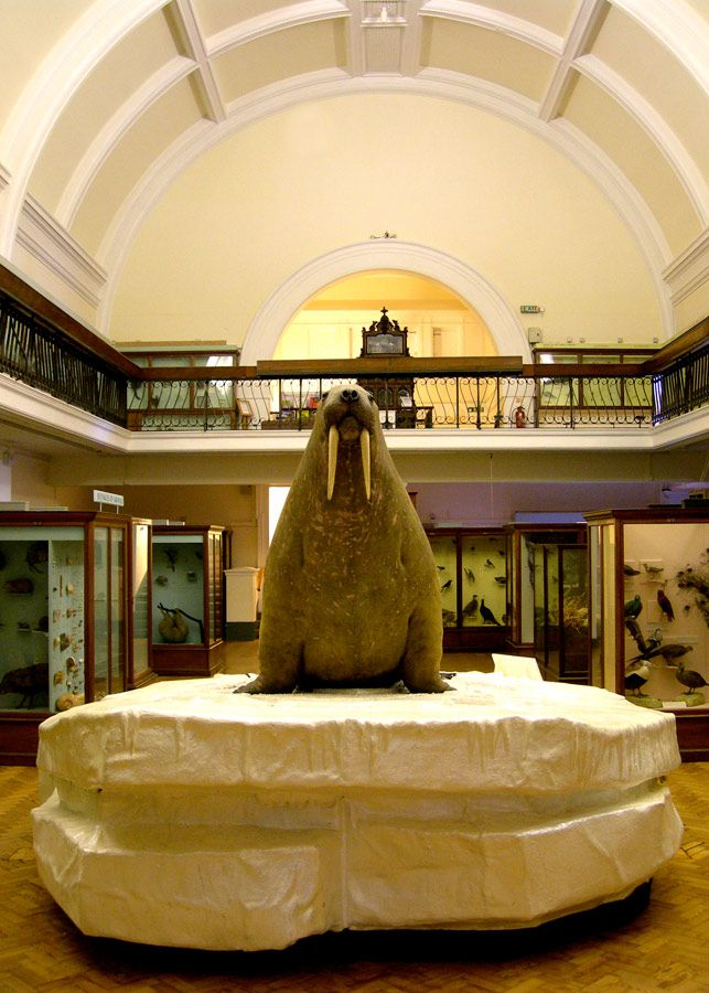 Horniman Museum and Gardens in Forest Hill, Greater London: http://www.visitlondon.com/things-to-do/place/288217-horniman-museum-and-gardens