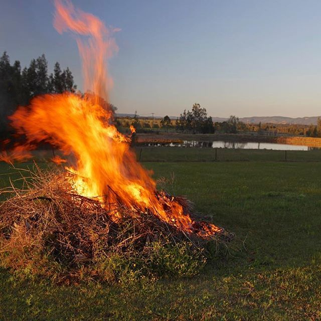 Early morning pile burn (aka bonfire)  ~ #pileburn #bonfire #Country_features #tv__rural #tv_lovelylanes #renegade_rural #the_home_front #farmsofinstagram #trb_rural #pocket_farms #countrylifestyle1 #splendid_outskirts #tv_charmingfences #ig_rural #awe_inspiringshots #universal_shotz #natureaddict #worldunion #igbest_shotz #princely_shotz #epic_captures #spendid_shotz #master_shots #clubsocial #pro_ig #worldshotz #magic_shots #infinity_shotz #incredible_shot #providencehuntervalley