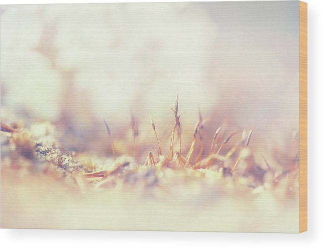 Flowering Moss. Little Fairy Land Wood Print by Jenny Rainbow.  All wood prints are professionally printed, packaged, and shipped within 3 - 4 business days and delivered ready-to-hang on your wall. Choose from multiple sizes and mounting options.