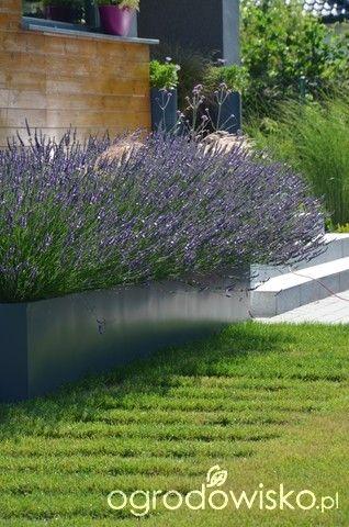 Ogród tworzę nowoczesny czyli wewnętrzna walka jak nie zostać kokoszką :) - strona 1001 - Forum ogrodnicze - Ogrodowisko