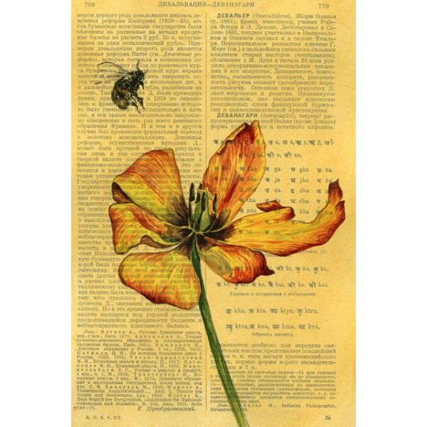 Tulip and bumblebee - Postcards, Pages of an old encyclopedia