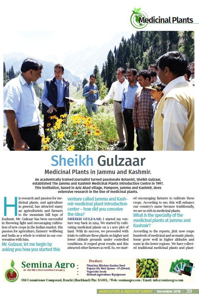 Ginkgo Cultivation In Kashmir Medicinal Plants Herbal Plants Buy Olive Tree