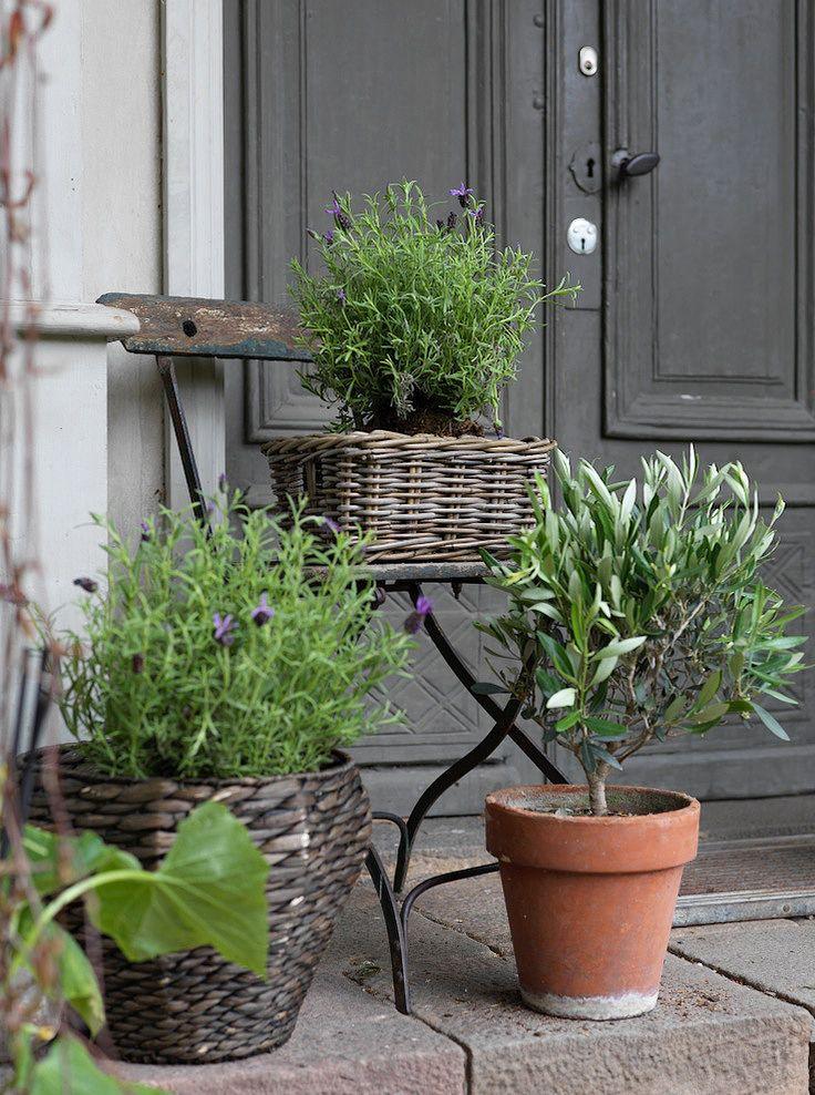 Krukväxter är vackert att placera ut på ett välkomnande sätt runt entrén. Tänk att ett litet olivträd och lavendel vid trappan kan förflytta oss i sinnet hela vägen till Provence!