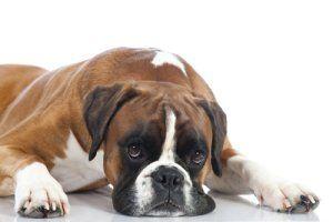 Low Cost Pet Meds | Stretcher.com - How to find affordable pet meds