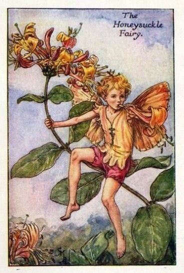 Honeysuckle Flower Fairy » Flower Fairy Prints- Vintage Fairy Prints by Cicely Mary Barker