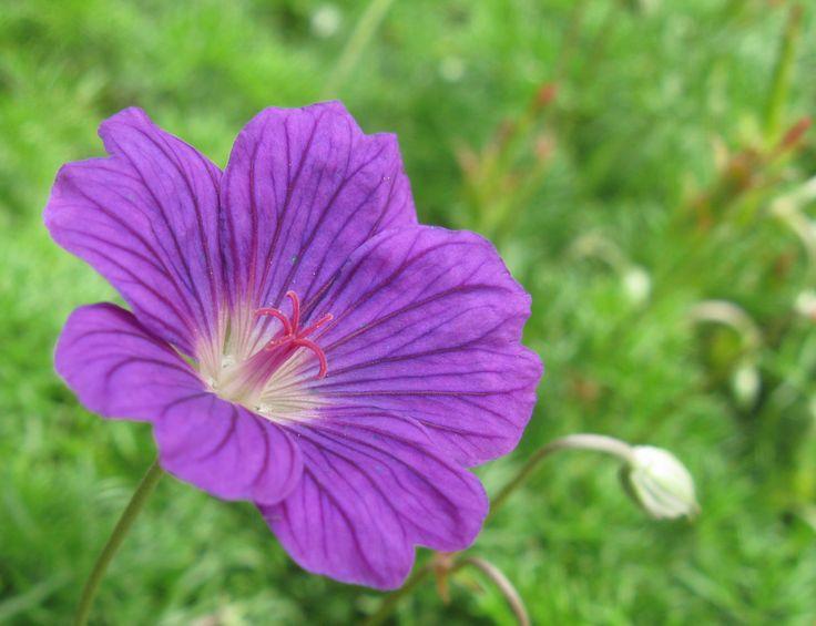 les 25 meilleures idées de la catégorie stigma flower sur