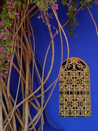"Jaques ""Majorelle blue"" at the Jardin du Majorelle in Marrakesh, Morocco."