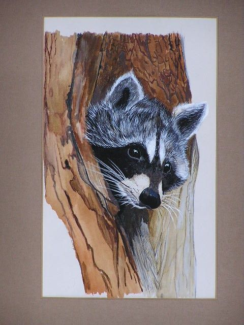 racoon water-colours on paper july 2013 #paola consani