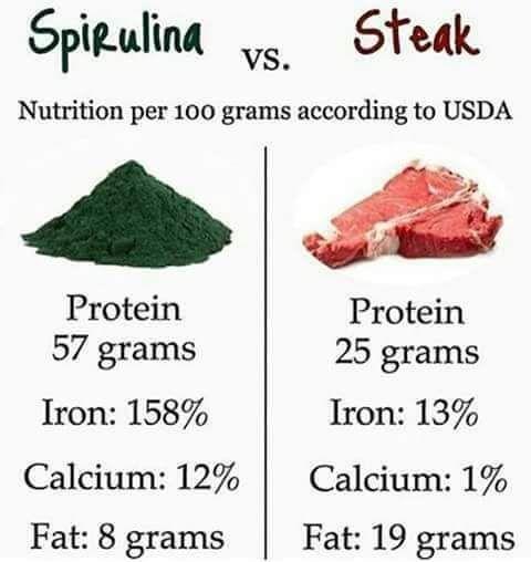 Spirulina vs Steak Nutrition per 1000 grams according to USDA Spirulina Protein 5 grams Iron: 158% Calcium: 12% Fat: 8 grams Steak Protein 25 grams Iron: 13% Calcium: 1% Fat: 19 grams Buy Spirulina Powder 1kg free worldwide delivery