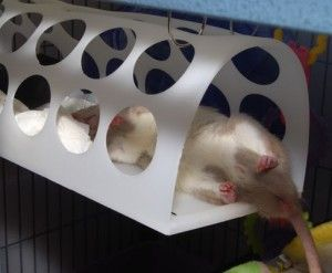 People are so clever!  Today I bring you 4 easy DIY rat condos,cages or hutches from modified Ikea furniture.  You can, of course, use other furniture too and