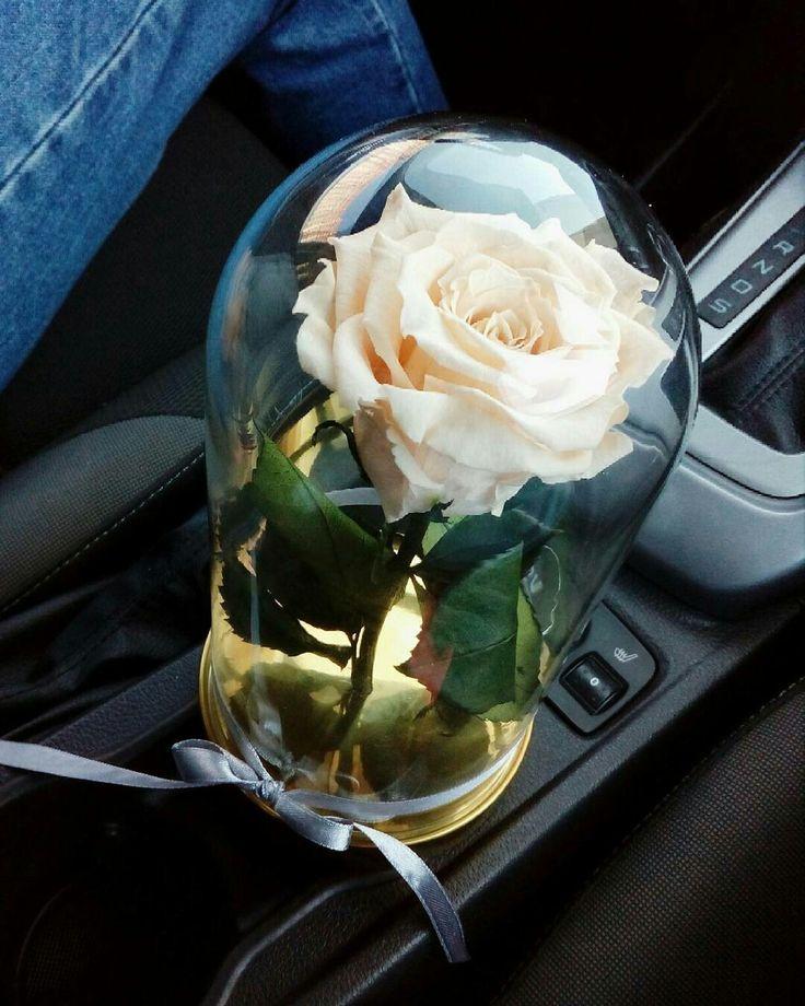 Картинки белые розы в машине