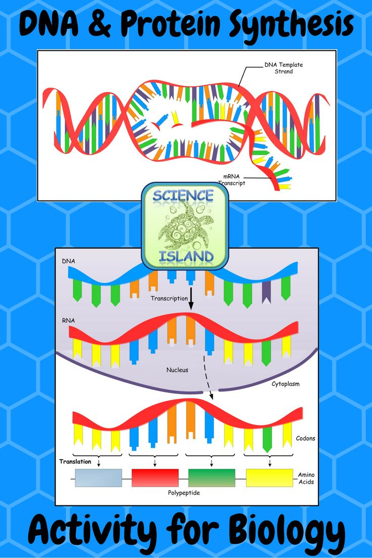 This challenging cooperative learning game for Biology uses paper cubes called REVIEW QUBES to take learning to a new level. Includes up to 72 random review questions about DNA structure & replication, transcription, translation, and mutations.