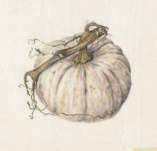 White Pumpkin<br />Watercolor on Vellum
