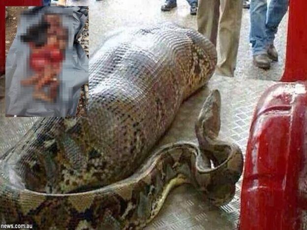 Kejadian wanita ditelan ular sawa di Taiping tidak benar   Jabatan Bomba dan Penyelamat Perak hari ini menafikan berita yang menjadi viral di laman sosial bahawa seorang wanita ditelan ular sawa di Taiping.  Wanita ditelan ular sawa tidak benar    Pengarahnya Datuk Yahya Madis berkata perkara itu adalah tidak benar dan pihaknya tidak pernah menerima panggilan kecemasan mengenai insiden itu.  Mesej mengenai ular sawa telan manusia di Jalan Aulong Taiping tersebut adalah palsu yang pernah…