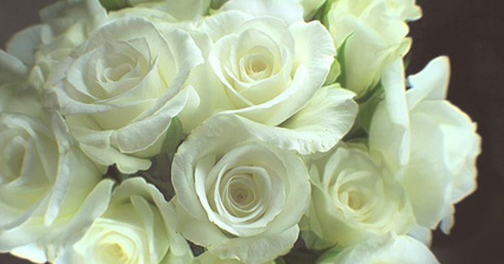Tipos de rosas blancas. El color de las rosas blancas significa humildad, inocencia, pureza, reverencia, el secreto, silencio, amor verdadero y juventud. Existen varios tipos de rosas blancas que ofrecen diferentes aspectos, texturas, tamaños y niveles de fragancia, según informa la Extensión de la Universidad de Illinois. Cada tipo de jardín de rosas blancas también ...
