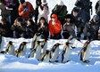 penguin/Asahiyama Zoo