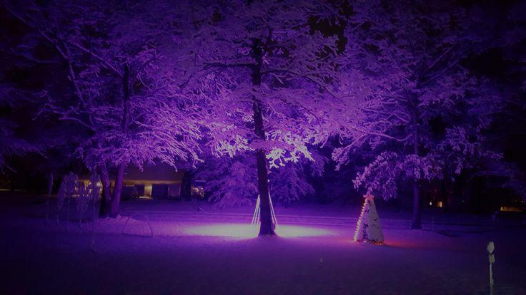 1600 led pixel lights purple reflecting off of fresh