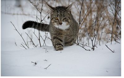 STICKERBOW  and the  ROSE: Cat Owners Gardasil-and-Bartonella-a-Dirty-Little-...