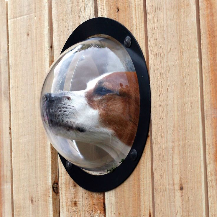 The Pet's Observation Porthole is available from Hammacher Schlemmer.  I think it is hilarious, and I'm just going to leave it at that.