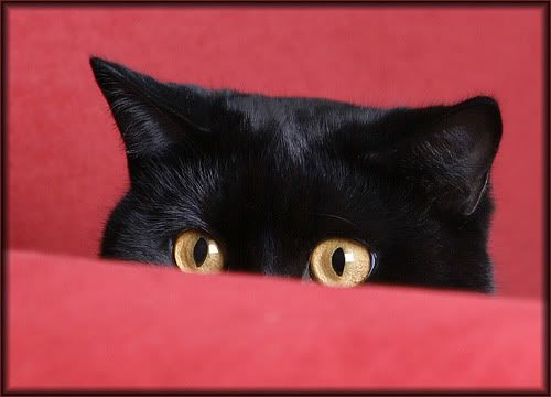 De olho em você.: Cats Cats, Cats Meow, Cat Eyes, The Cats, Cats Ad, 3Black Cats, Photo, Cats Inslaving