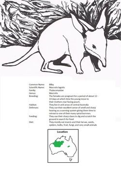 Austrailan animal coloring and fact sheets