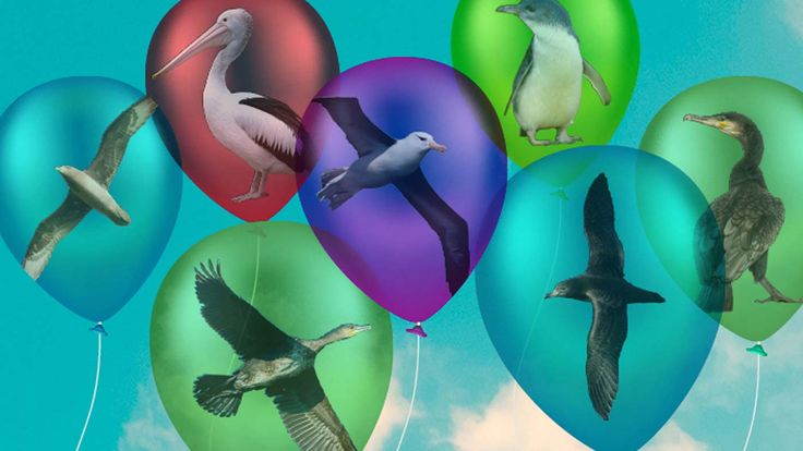 Have you ever let a helium balloon drift off into the sky? Well, Zoos Victoria says that it's actually an incredibly dangerous thing to do because of the effect the popped balloon can have on birds, animals and sea creatures. So they are campaigning for balloons to be banned outside.