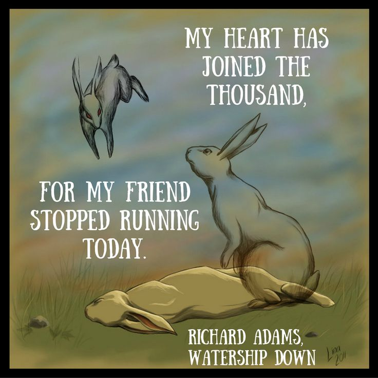 Dealing with Death. From Watership Down by Richard Adams