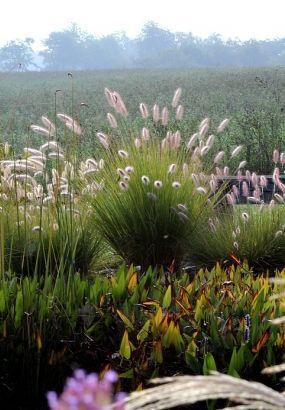 Redécouvrez les graminées à l'automne, c'est la saison idéale pour profiter de leurs couleurs, de leurs reflets et de leur légèreté dans les massifs.