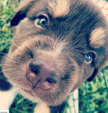 25 Pictures of Adorable Puppies Equals 25 Reasons to Smile!