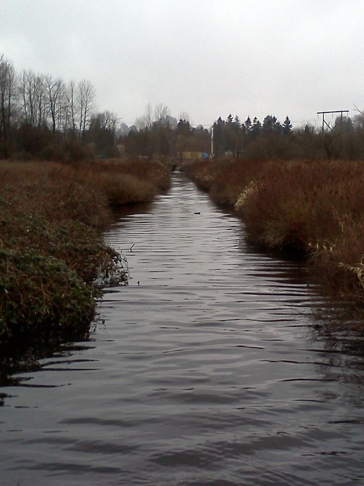 a stream around burnaby lake