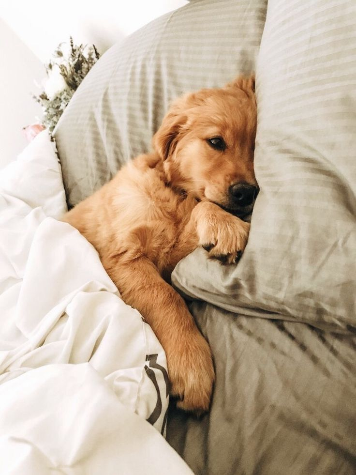 Lazy Sunday Cutefurbabies Letsbepriceless Inspo With Images