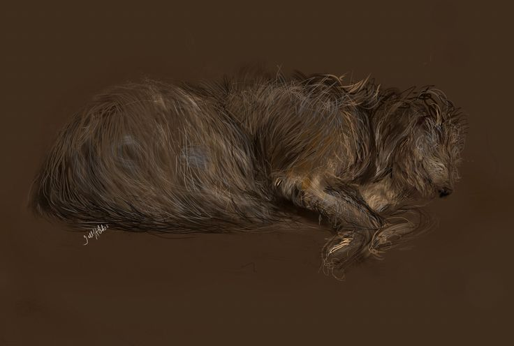 Harris, our Lurcher. iPad sketch.