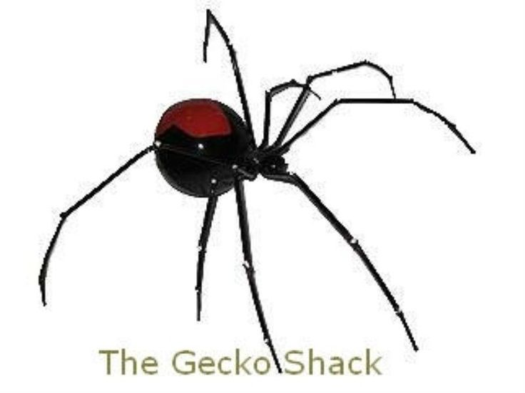 Australian Red Back Spider, Large Metal wall Decor Ornament, Very Cool! Arachnid.. Rings on two of his feet for easy wall or ceiling hanging... Looks Fantastic
