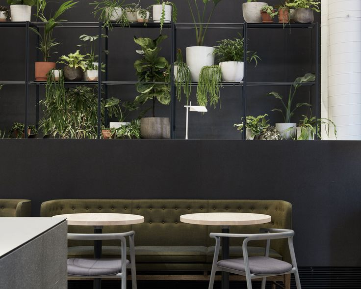 Higher Ground Melbourne | Yellowtrace - Plants In Kitchen