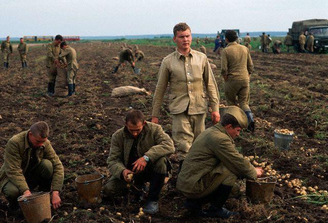 Солдаты копали картошку. Все иностранцы радостно ездили это фотографировать, хвастаясь в цветных журналах уровнем деградации вчерашнего врага номер один.