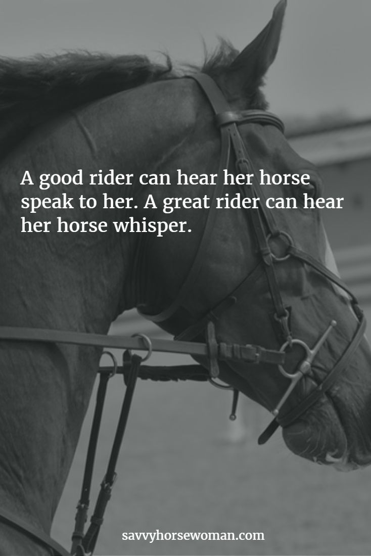 A good rider can hear her horse speak to her. A great rider can hear her horse whisper.